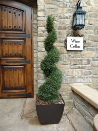 Rosemary Spiral Deluxe Landscaping Pinterest Outdoor Topiary