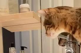 besitzerin zeigt katze trick dann steht plötzlich die ganze