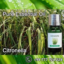 citronella oil 100 pure sri lankan buy citronella oil
