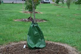 Homemade Automatic Christmas Tree Waterer by What Grows There Hugh Conlon Horticulturalist Professor