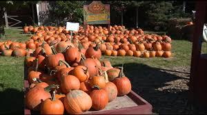 Central Wisconsin Pumpkin Patches by Caledonia U0027s U0027the Pumpkin Patch U0027 Sold Wrex Com U2013 Rockford U0027s News