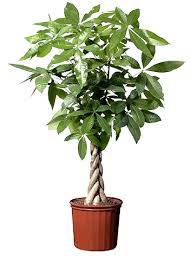Plants In Bathroom Feng Shui by These Plants Bring Luck Wealth Prosperity And Health To Home