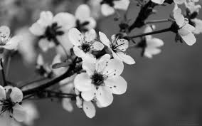 Black And White Flowers 1161108 Home Decor Ideas Shabby Chic