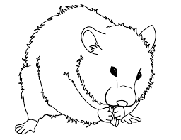 Cute Coloring Pages Hamsters Printable Sheet Anbu