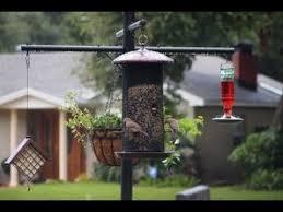 Best Squirrel Proof Bird Feeder Pole and Baffle System