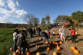 Chatham Kent Pumpkin Patches by Seasonal Vintage Train Rides Daily Dose