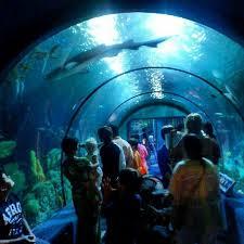 39 best Aquarium Pyramid images on Pinterest