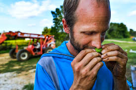 Alpha Illinois Pumpkin Patch by Photos Hallowed Hops Farm Journal Star Peoria Il