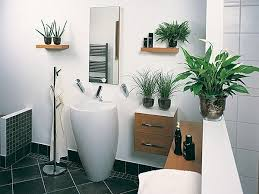 badezimmer pflanzen badezimmer pflanzen badezimmer pflanzen