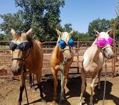 Bishops Pumpkin Farm Wheatland California by Cade U0027s Happy Day Pony Rides Home Facebook