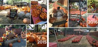 Pumpkin Patch South Austin Tx by Christ Lutheran Church Get Involved