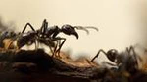 insekten ameisen platzen wenn sie backpulver fressen