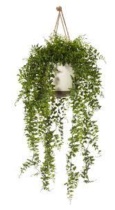 Best Plant For Bathroom by Good Indoor Plants Mesmerizing Best Indoor Plant 6 Best Organic