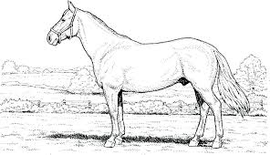 Spirit Horse Coloring Pages Picture Of A To Print