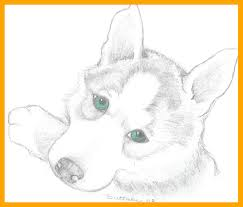 Stunning Siberian Husky Puppies Coloring Pages Molly Puppy For