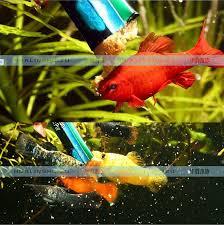 poisson eau douce aquarium tropical jbl congelés nourriture pour poissons d aquarium tropical d eau