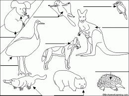 Label Australian Animals Enchantedlearning 533791 A Coloring Pages