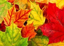 Top Fall Leaves HD Wallpapers Stunning Free Download