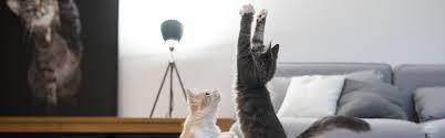 wie fit ist deine katze cat s best