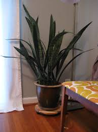 Best Plant For Bathroom by Good Plant For Bedroom Scifihits Com