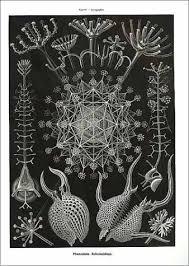 Art Forms In Nature The Prints Of Ernst Haeckel Olaf Breidbach Richard Hartmann Irenaeus Eibl Eibesfeldt 9783791319902 Amazon