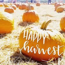 San Jose Pumpkin Patch 2017 by Best 25 Local Pumpkin Patch Ideas On Pinterest Pumpkin Field