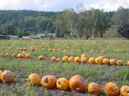 Pumpkin Patch Miami Lakes by Scholz Farm And Garden Localharvest