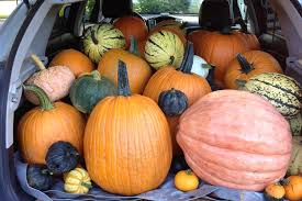 Marana Pumpkin Patch 2015 by Pick Your Own Pumpkins At Our Saratoga Farm