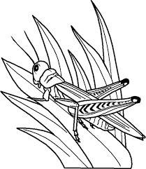 Grass Grasshopper Perch On Coloring Pages