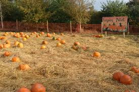 Naughty Pumpkin Carvings by Pumpkin Picking In Ireland At Kennedys Pumpkin Patch