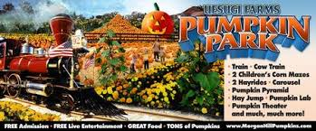 Wheatland California Pumpkin Patch by Find Corn Mazes In San Martin California Uesugi Farms Pumpkin