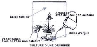 soin pour orchidée en pot l atelier des fleurs