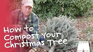 Pickle On Christmas Tree Myth by How To Compost Your Christmas Tree Greenshortz Diy Youtube