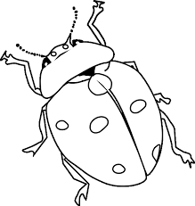 Ladybug Coloring Pages 2