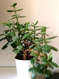 grüner wohnen 8 pflegeleichte pflanzen für dein zuhause