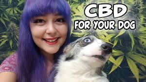 CBD For Pets   Treating Health Problems & Illness In Animals Best Cbd Oil For Dogs In 2019 Reviews Of The Top Brands And Grateful Dog Treats Canna Pet King Kanine Coupon Code Review Pets Codes Promo Deals On Offerslovecom Hemppetproducts Instagram Photos Videos Cbd Voor Die Diy Book Marketing Buy Cannabis Products Online Mail Order Dispensarygta April 2018 Package Cannapet Advanced Maxcbd 30 Capsules 10ml Liquid V Dog Coupon Finder Beginners Guide To Health Benefits Couponcausecom Purchase Today Your Chance Win A Free Cbdcannabis Hashtag Twitter