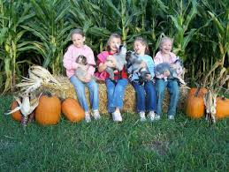 Pumpkin Patches Cincinnati Ohio Area by 14 Pick Your Own Pumpkin Patches In The Tri State Cincy Weekend