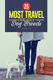 Non Shedding Dogs Family Friendly by 25 Most Travel Friendly Dog Breeds To Take With You Anywhere