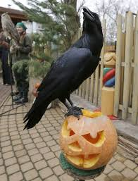 Cincinnati Zoo Halloween by Oh My Gourd Adorable Zoo Animals Play With Halloween Pumpkins