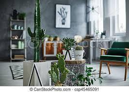 modernly kakteen zimmer dekorationen entworfen canstock