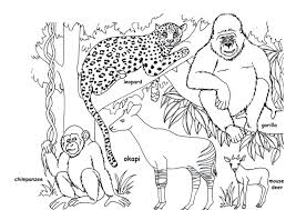 Wild Animal Coloring Pages Free Printable