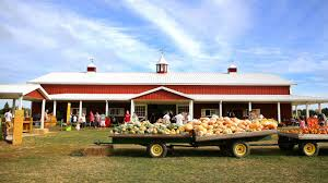 Nj Pumpkin Picking by 10 Best Spots For Apple And Pumpkin Picking Near Nyc