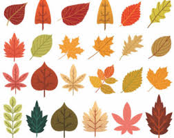 Fall Leaves Clip Art 89