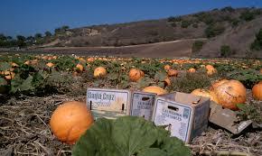 Pumpkin Patch Santa Barbara Ca by October 2011 Live Laugh Learn
