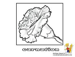 Daffodil Flower Free Coloring Pictures Carnation Colorable At YesColoring