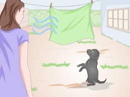 Dog Urine Stains On Hardwood Floors Removal by 4 Ways To Remove Dog Urine Wikihow