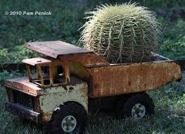 A Toy Dump Truck Has To Be The Most Unusual Planter Ive Ever Seen And This Golden Barrel Cactus Looks Right At Home In It I Spotted Playful Combo
