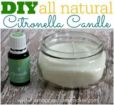 best 25 citronella oil ideas on pinterest bug repellent candles