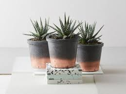Best Plants For Bathroom Feng Shui by Plant In Bedroom Good Or Bad Centerfordemocracy Org