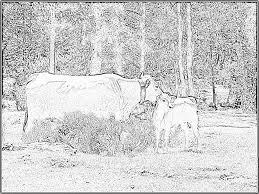 Souriant Vache Tachetée Son Petit Veau Boire Lait Noir Blanc Image